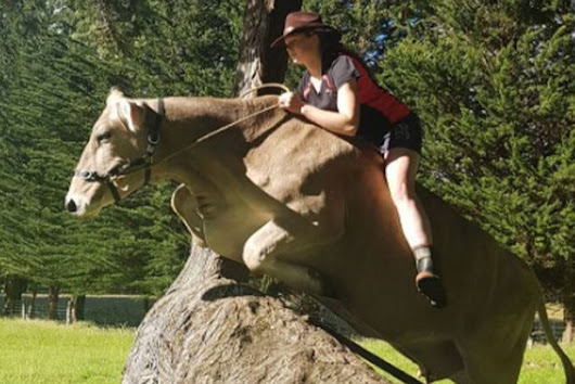 Girl who wanted pony for birthday told it's too expensive – gets cow instead