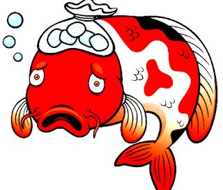 Bagaimana cara tepat menyembuhkan ikan koi yang sedang terkena penyakit