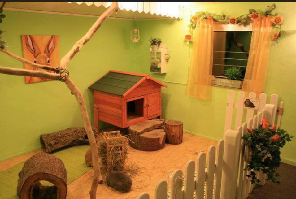 Blue dream lapins nains une aire pour votre lapin for Construire une cabane a lapin exterieur