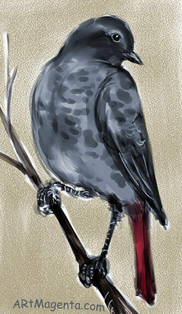 Black redstart, a bird sketch by Artmagenta