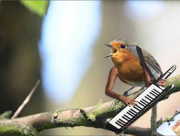Ljudi bez maste umjesto sisa: Ptica, najveći neprijatelj
