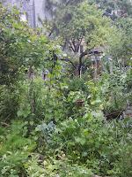 dense community garden