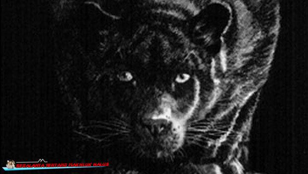 Kucing Gila, Tempat Paling Angker di Riau