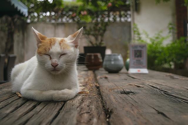 Chat dormant sur une table en bois