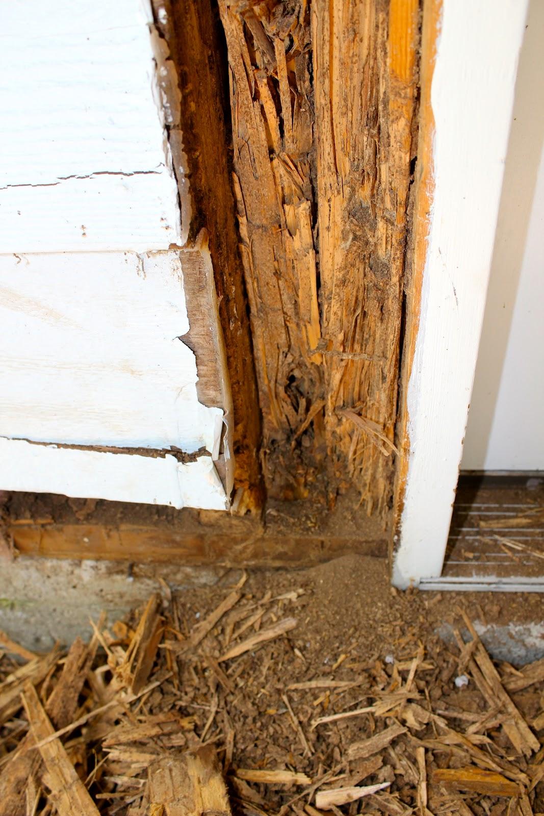 Termite Invasion Phillip S Natural World
