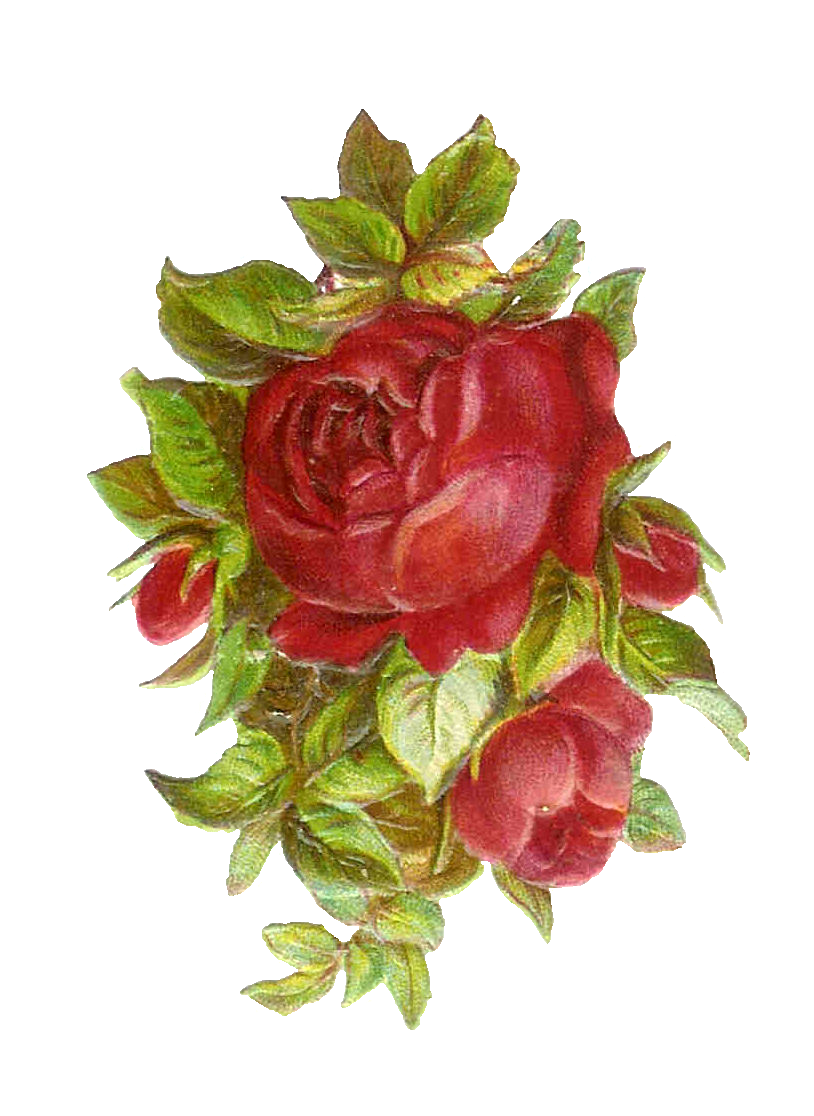 red roses clipart - photo #36