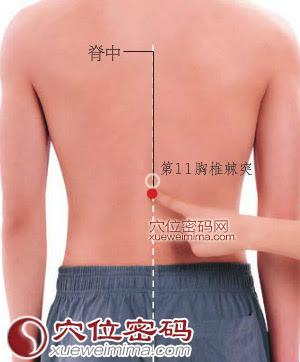 脊中穴位 | 脊中穴痛位置 - 穴道按摩經絡圖解 | Source:xueweitu.iiyun.com