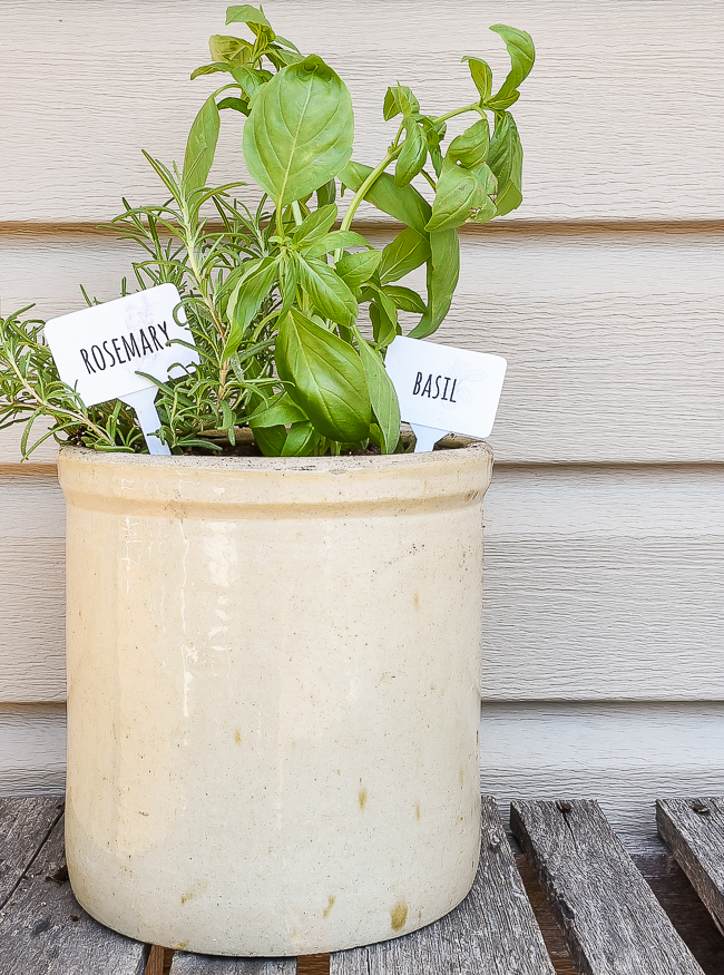 Dollar Tree herb garden markers