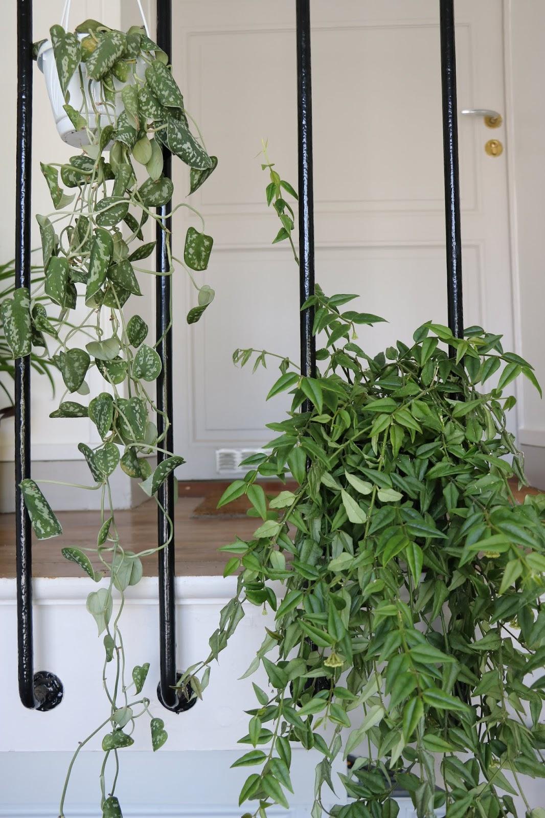 Plante D Intérieur Qui Aime La Chaleur mes plantes d'interieur (+ mini guide) - lily fairly