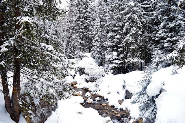 passeggiate invernali val di fiemme