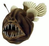 anger اسم السمكة الذي أطلق على Nexus 6P