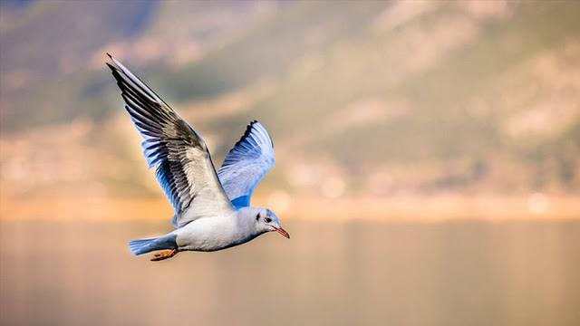 تفسير الطير في المنام للامام الصادق