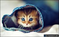 صور صور قطط كيوت 2020 خلفيات قطط جميلة جدا cats23.png