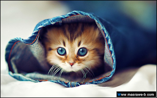صور قطط كيوت 2016 خلفيات cats23.png