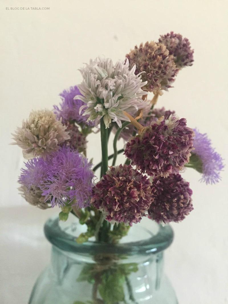 cebollino (Allium schoenoprhasum), Armeria marítima y Ageratum