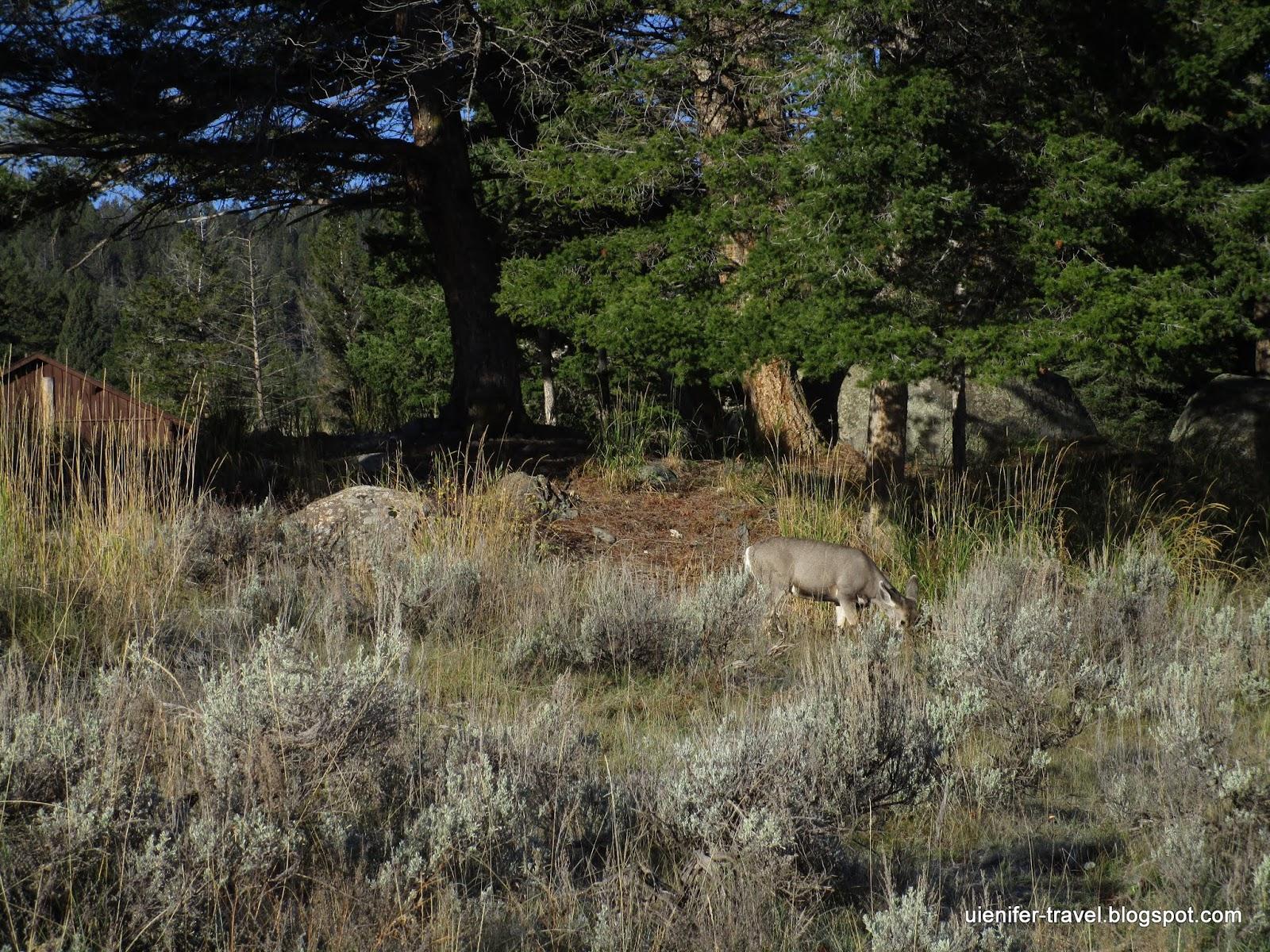 Йеллоустоун, Вайоминг (Yellowstone National Park, WY)