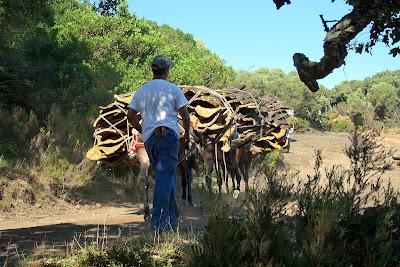 Reata de mulos camino del patio de corchas