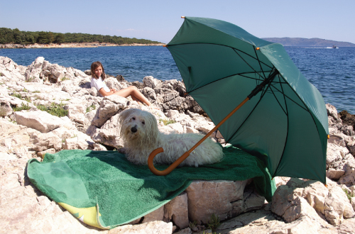 dog sitting under umbrella at beach