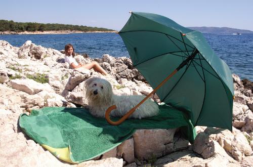 dog sitting under umbrella at beach