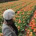 Os campos de tulipas na Holanda!