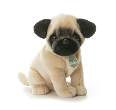 Cute Baby Dog Wallpapers Backgrounds Dogs Wallpapers Backgrounds