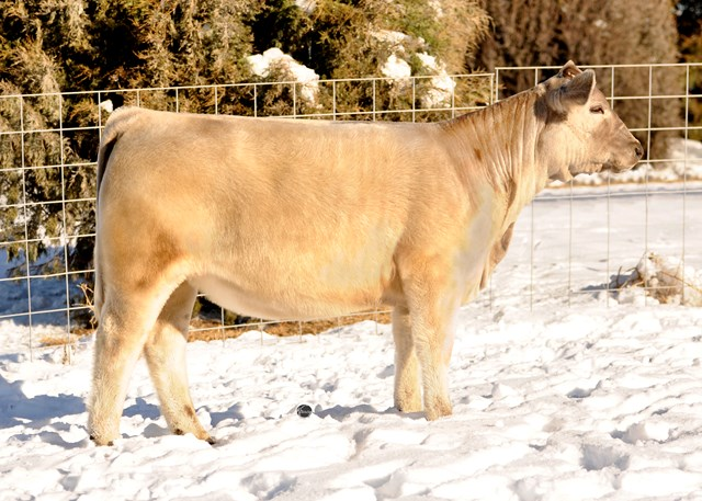 Executive Sires, Inc : From Ron Springer - 3 Stellar Show
