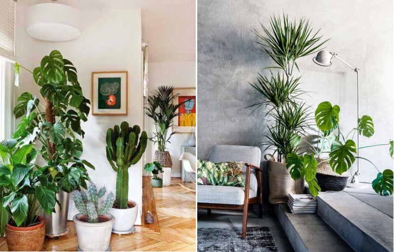 Plantas no interior preto marfim - Cuidados plantas interior ...