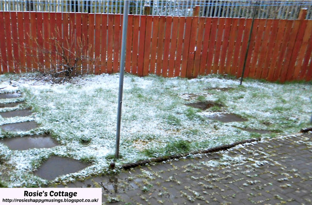 Snow arrives for a brief visit to a Scottish spring garden