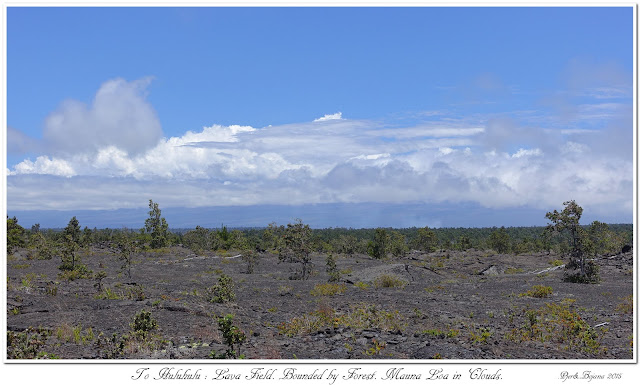 To Huluhulu: Lava Field. Bounded by Forest. Mauna Loa in Clouds.