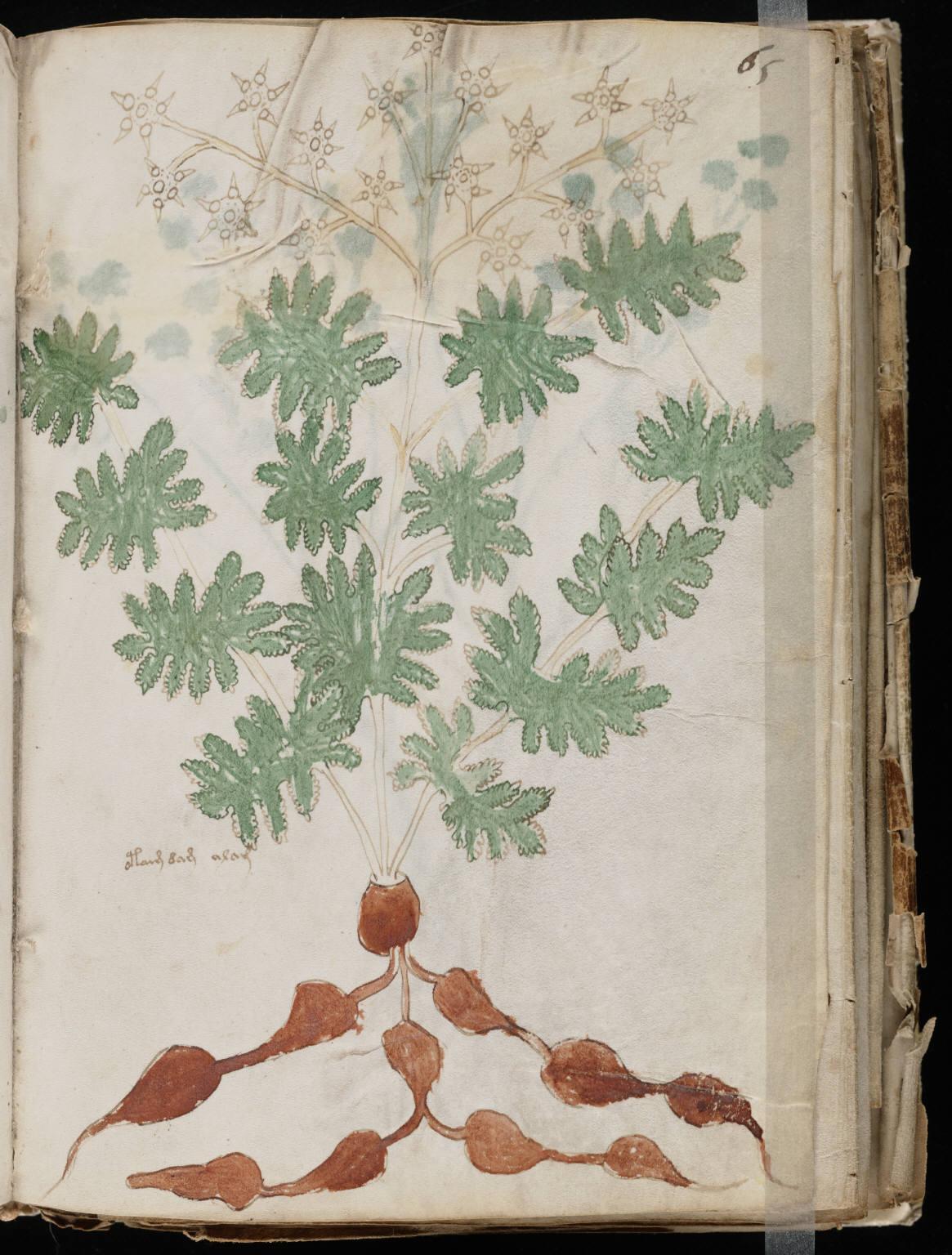 manuscrito115