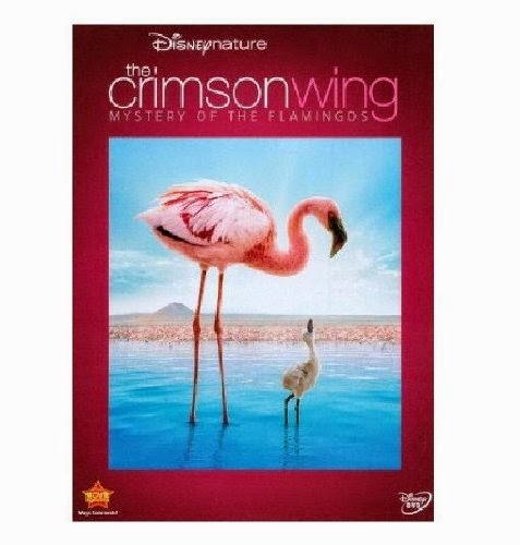 Crimson Wing Movie for Bird Theme Homeschool Preschool Unit