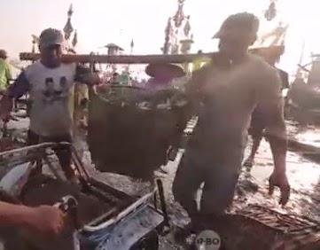 buruh pengangkut ikan disebut manol