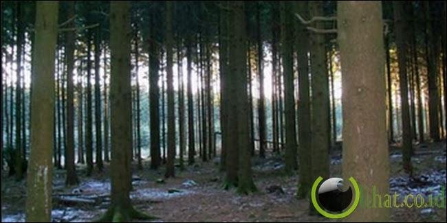 Hutan Ardennes