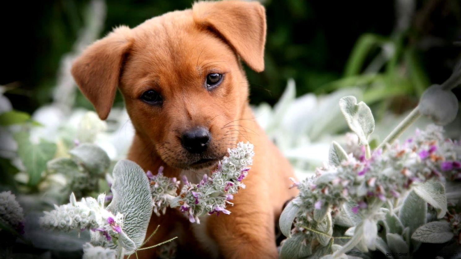 Puppy Sad Animals | Best HD Wallpapers