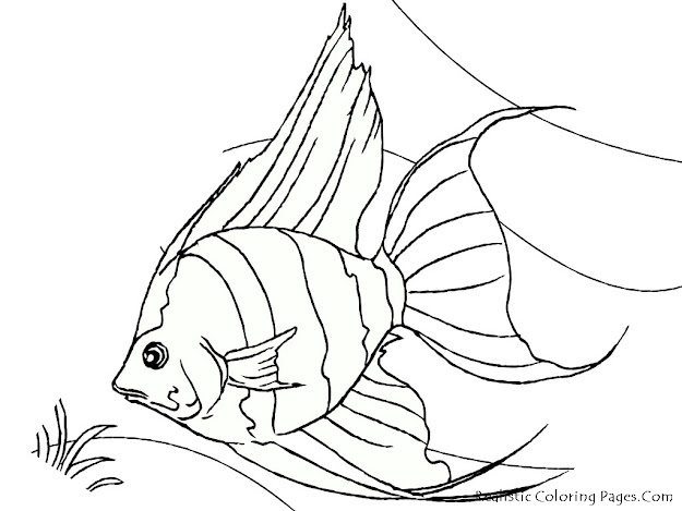 Tropical Fish Coloring Pages  Tropical Fish Coloring Pages Printable