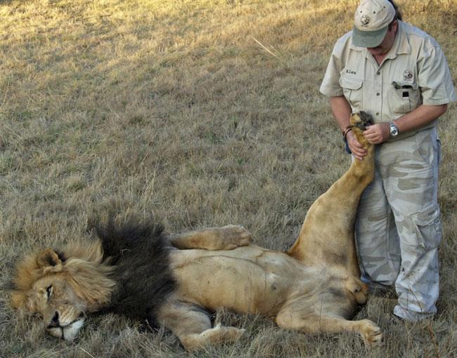 Lion S Dick 28