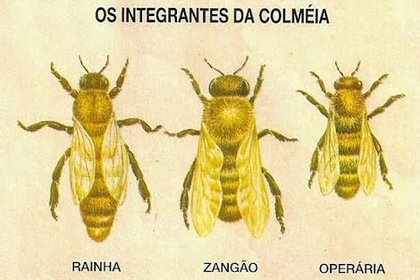 """Conheça o """"Projeto Colmeia"""" desenvolvido por estudantes de Barroquinha/CE"""