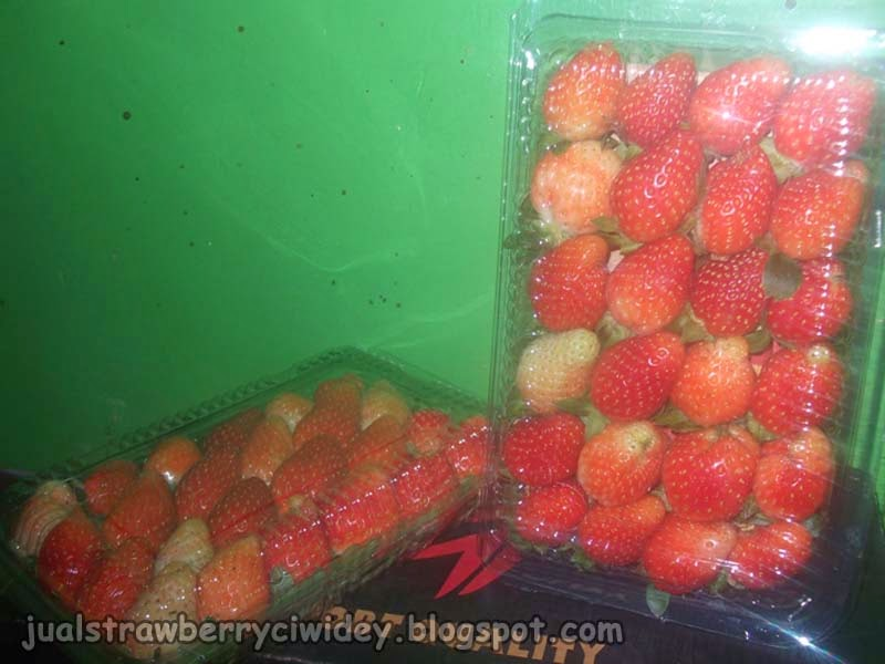 Jual strawberry segar grade B