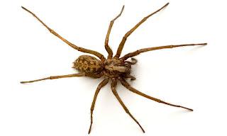 شركة مكافحة عناكب بالدمام