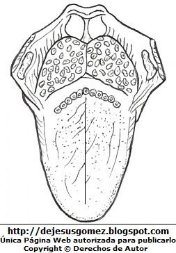 Imagen de la lengua del ser humano para colorear pintar imprimir. Dibujo de una lengua de Jesus Gómez