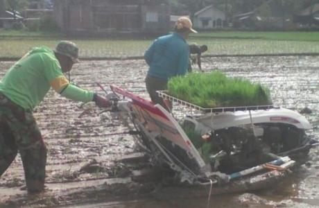 Dandim 0312 Padang Perintahkan Babinsa Bantu Petani Tanam Padi dengan Mesin Transplanter