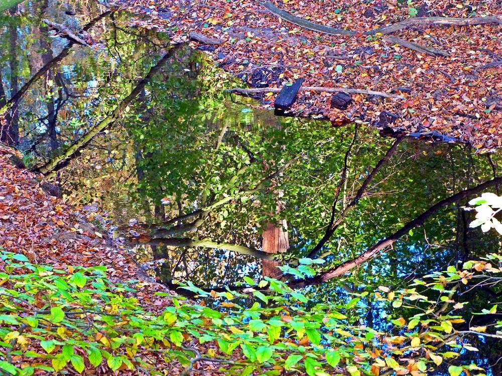 Spiegelung von Ästen und grünen Blättern im Quellwasser