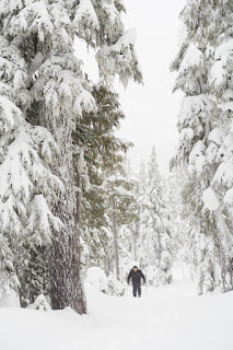 Mount Allen Brooks, Skitourig Strathcona Park, Vancouver Island