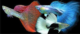 Jual Apakah Guppy Bisa di Campur Dengan Ikan Lain??,  Harga Apakah Guppy Bisa di Campur Dengan Ikan Lain??,  Toko Apakah Guppy Bisa di Campur Dengan Ikan Lain??,  Diskon Apakah Guppy Bisa di Campur Dengan Ikan Lain??,  Beli Apakah Guppy Bisa di Campur Dengan Ikan Lain??,  Review Apakah Guppy Bisa di Campur Dengan Ikan Lain??,  Promo Apakah Guppy Bisa di Campur Dengan Ikan Lain??,  Spesifikasi Apakah Guppy Bisa di Campur Dengan Ikan Lain??,  Apakah Guppy Bisa di Campur Dengan Ikan Lain?? Murah,  Apakah Guppy Bisa di Campur Dengan Ikan Lain?? Asli,  Apakah Guppy Bisa di Campur Dengan Ikan Lain?? Original,  Apakah Guppy Bisa di Campur Dengan Ikan Lain?? Jakarta,  Jenis Apakah Guppy Bisa di Campur Dengan Ikan Lain??,  Budidaya Apakah Guppy Bisa di Campur Dengan Ikan Lain??,  Peternak Apakah Guppy Bisa di Campur Dengan Ikan Lain??,  Cara Merawat Apakah Guppy Bisa di Campur Dengan Ikan Lain??,  Tips Merawat Apakah Guppy Bisa di Campur Dengan Ikan Lain??,  Bagaimana cara merawat Apakah Guppy Bisa di Campur Dengan Ikan Lain??,  Bagaimana mengobati Apakah Guppy Bisa di Campur Dengan Ikan Lain??,  Ciri-Ciri Hamil Apakah Guppy Bisa di Campur Dengan Ikan Lain??,  Kandang Apakah Guppy Bisa di Campur Dengan Ikan Lain??,  Ternak Apakah Guppy Bisa di Campur Dengan Ikan Lain??,  Makanan Apakah Guppy Bisa di Campur Dengan Ikan Lain??,  Apakah Guppy Bisa di Campur Dengan Ikan Lain?? Termahal,  Adopsi Apakah Guppy Bisa di Campur Dengan Ikan Lain??,  Jual Cepat Apakah Guppy Bisa di Campur Dengan Ikan Lain??,  Apakah Guppy Bisa di Campur Dengan Ikan Lain??  Jakarta,  Apakah Guppy Bisa di Campur Dengan Ikan Lain??  Bandung,  Apakah Guppy Bisa di Campur Dengan Ikan Lain??  Medan,  Apakah Guppy Bisa di Campur Dengan Ikan Lain??  Bali,  Apakah Guppy Bisa di Campur Dengan Ikan Lain??  Makassar,  Apakah Guppy Bisa di Campur Dengan Ikan Lain??  Jambi,  Apakah Guppy Bisa di Campur Dengan Ikan Lain??  Pekanbaru,  Apakah Guppy Bisa di Campur Dengan Ikan Lain??  Palembang,  Apakah Guppy Bisa di Cam