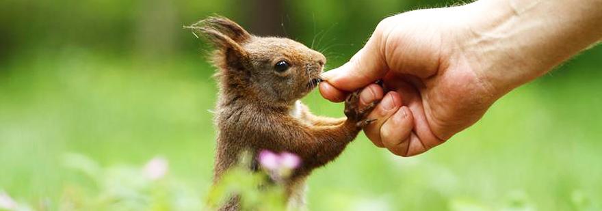 野生動物への害がより少ない未来に向けた取り組み animal ethicsより