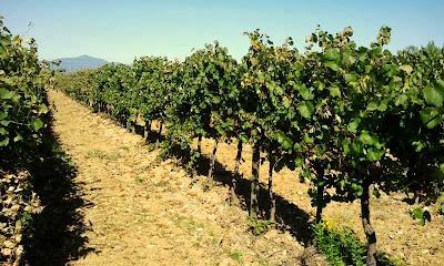 orvieto italian wine