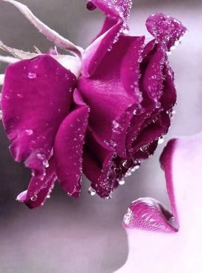 merveilles poèmes d'amour