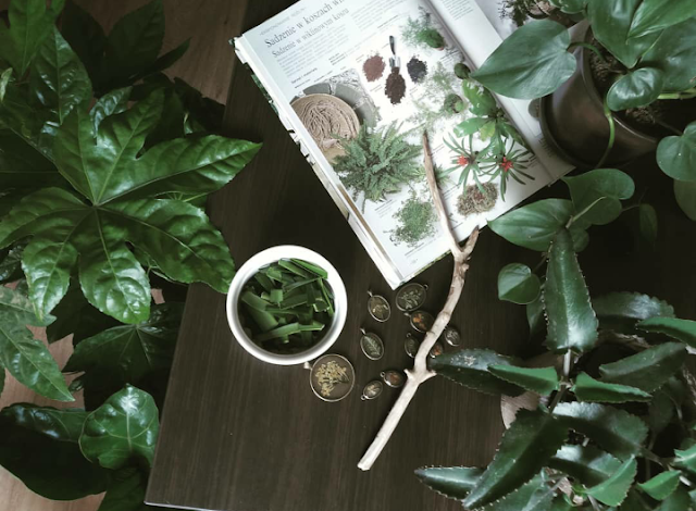 Czy popularną roślinę doniczkową można wykorzystać kosmetycznie? - kilka ciekawostek na temat juki