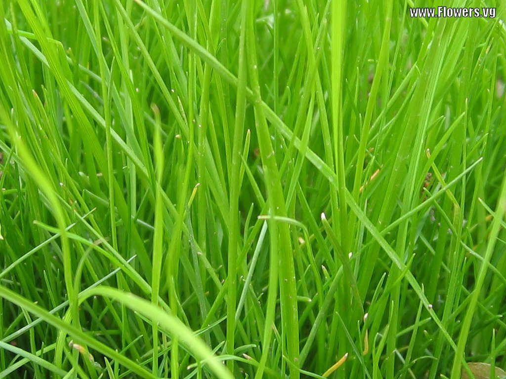 Kelsey Chen: grass background