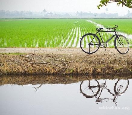 Suara golongan pesawah dalam meningkatkan komoditi pertanian padi Malaysia